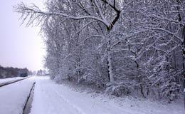 Inverno bianco Fotografie Stock Libere da Diritti