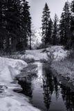 Inverno in bianco e nero Immagini Stock Libere da Diritti