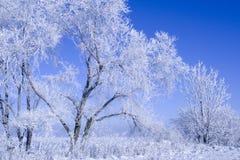 Inverno blu Fotografia Stock Libera da Diritti