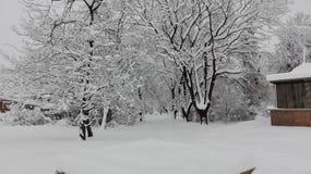 Inverno branco fotografia de stock