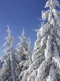 Inverno branco Fotos de Stock