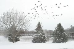Inverno branco Imagem de Stock Royalty Free