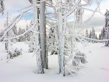 Inverno branco Imagem de Stock