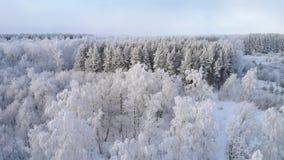 inverno branco Forest On da neve Sunny Day vídeos de arquivo