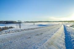 inverno branco, névoa e árvores Manhã silenciosa e ensolarada 2012 Fotos de Stock Royalty Free