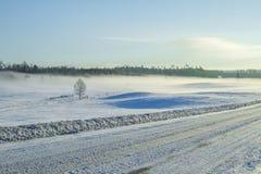 inverno branco, névoa e árvores Manhã silenciosa e ensolarada 2012 Fotos de Stock