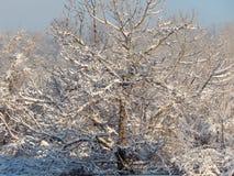 inverno branco nas árvores foto de stock
