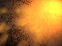 Inverno caldo Fotografia Stock