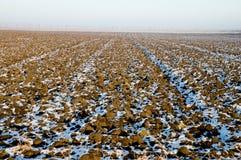 Inverno-campo Fotografie Stock