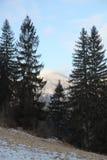 Inverno Carpathians Immagini Stock Libere da Diritti