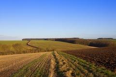 Inverno che coltiva paesaggio Immagine Stock Libera da Diritti