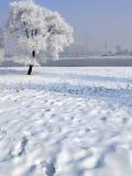 Inverno in Cina, isola di Wusong Immagini Stock