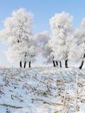 Inverno in Cina, isola di Wusong Fotografia Stock