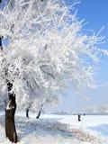 Inverno in Cina, isola di Wusong Immagine Stock