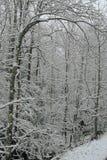 Inverno cénico, Smokies Fotos de Stock Royalty Free