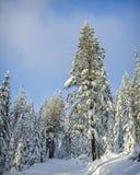 inverno coberto de neve da floresta Fotografia de Stock