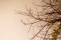 inverno com ramos e céu de árvore Imagens de Stock Royalty Free