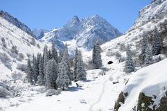 Inverno con le montagne e gli pelliccia-alberi in neve Immagine Stock