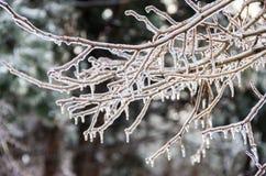 inverno. Congelamento. Fotografia de Stock