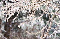 inverno. Congelamento. Imagens de Stock