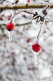 inverno. Congelamento. Imagens de Stock Royalty Free