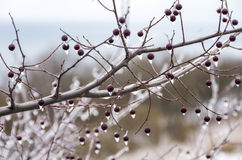 inverno. Congelamento. Fotografia de Stock Royalty Free