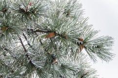 inverno. Congelamento. foto de stock royalty free