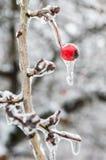 inverno. Congelamento. fotos de stock royalty free