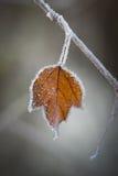 Inverno congelato Immagini Stock Libere da Diritti