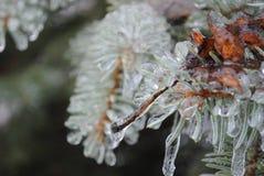 Inverno congelato Fotografie Stock