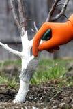 inverno da árvore do cuidado Imagem de Stock Royalty Free