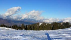 inverno da floresta Fotografia de Stock Royalty Free