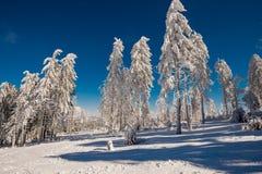 inverno da floresta Imagem de Stock