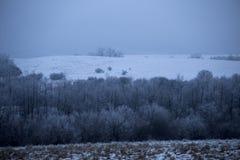 inverno da floresta Imagens de Stock