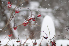 Inverno da neve fotografia de stock royalty free
