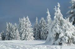 inverno da neve Foto de Stock