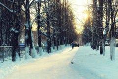 inverno da passagem das árvores da aleia Fotografia de Stock