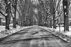 Inverno da rua da árvore Fotos de Stock Royalty Free