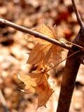 Inverno de Brown Fotografia de Stock Royalty Free