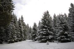 Inverno de Harz fotografia de stock