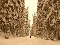 Inverno de Murk Imagem de Stock Royalty Free