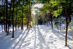 Inverno de Nova Inglaterra fotos de stock royalty free