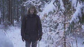 inverno de passeio Forest Traveler With Backpack da neve do homem Manhã ensolarada do inverno video estoque