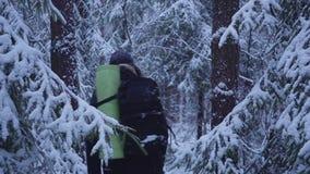 inverno de passeio Forest Traveler With Backpack da neve do homem olha a floresta da neve filme