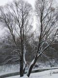 inverno de Peyzash foto de stock royalty free