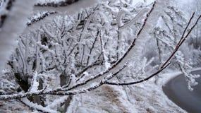 inverno de Sabanta Fotografia de Stock Royalty Free