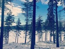 Inverno degli alberi di Sognsvann NBN di inverno degli alberi Immagine Stock Libera da Diritti