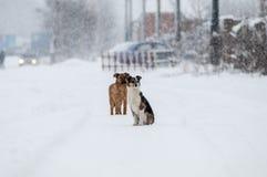 Inverno dei cuccioli fotografia stock libera da diritti