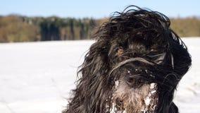 Inverno 1 del cane immagini stock