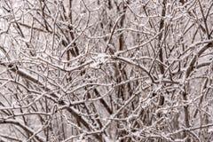 Inverno del fondo di brina della neve dei rami Immagine Stock
